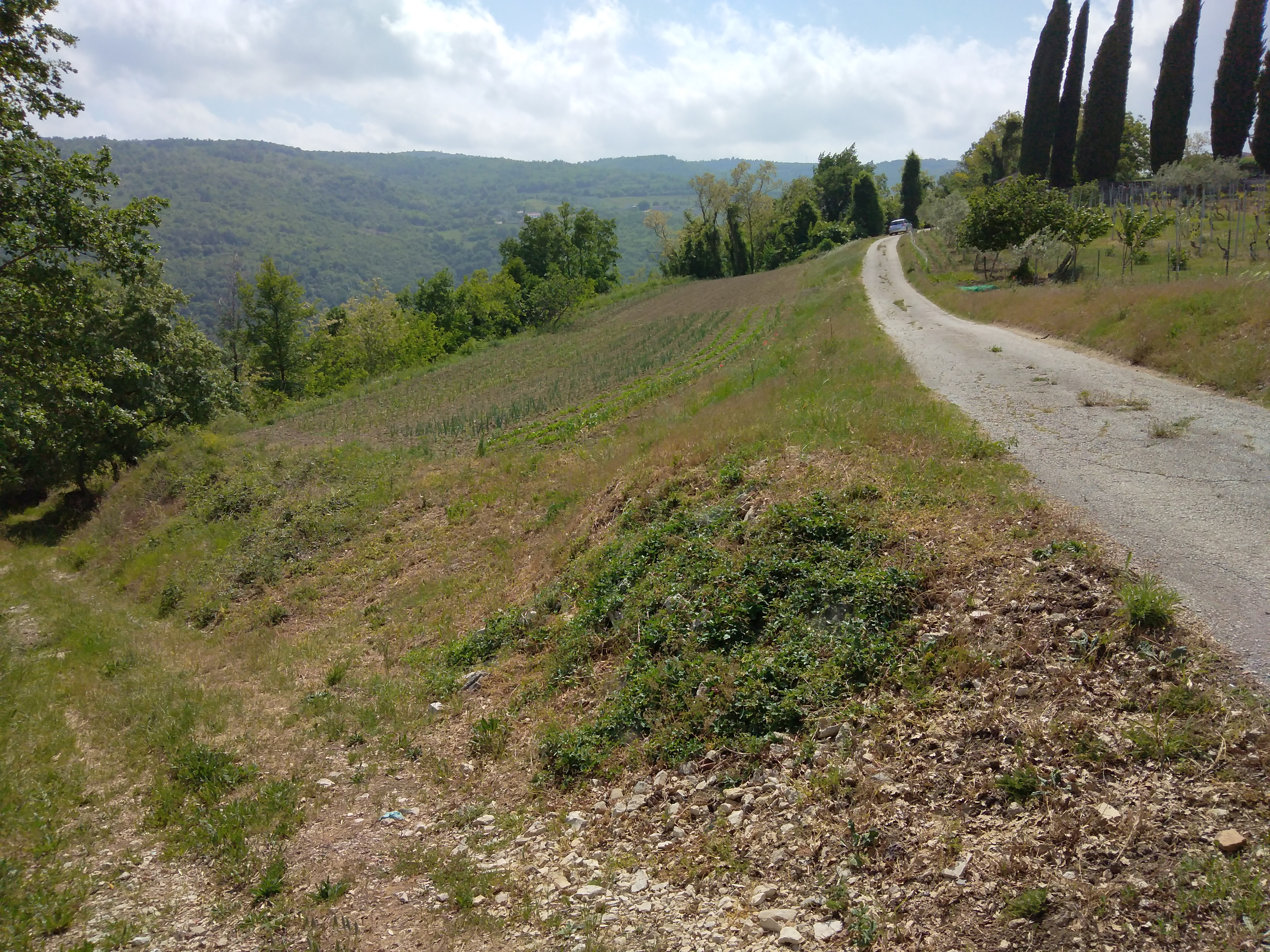 Z-633 Building plot in an idyllic and quiet location near Motovun with a beautiful panoramic view